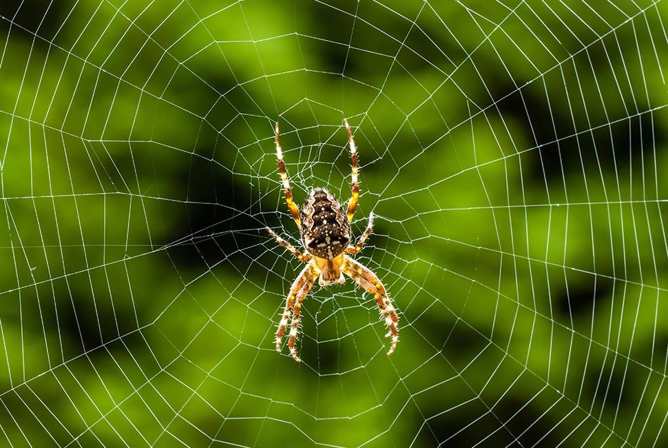 Détruire les insectes rampants, araignées...
