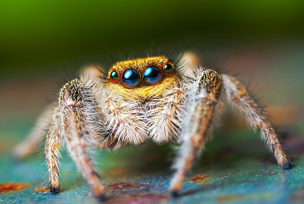 Détruire les araignées